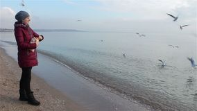Young woman feeding seagulls on the beach stock video footage
