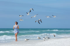 Young woman feeding seagulls on tropical beach, Florida Royalty Free Stock Images