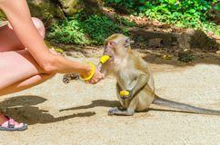 Young woman feeding small monkey with banana Stock Photography