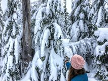 A young woman feeding whiskyjack and stellar jay birds out of her hand while snowshoeing along the Bowen Island Lookout trail on C. Ypress Mountain, in British stock images