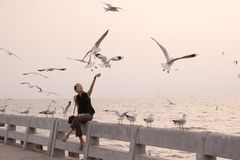 Young woman feeds birds at sunset stock photography