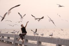Young woman feeds birds at sunset royalty free stock images
