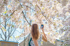 Young woman female girl take measure record device sakura tree Stock Images