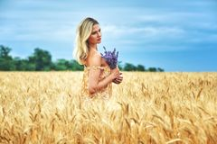 Young woman in a field with wheat Royalty Free Stock Image