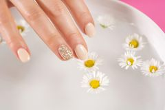 Young woman finger with cream nails polish touch daisy flower. In bowl with water. Manicure concept. Close up, selective focus Royalty Free Stock Image