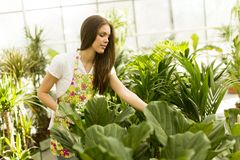 Young woman in flower garden Stock Photography