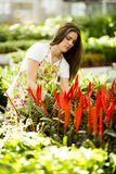 Young woman in flower garden Royalty Free Stock Images