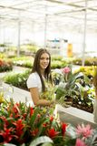 Young woman in flower garden Stock Images