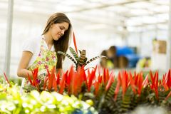 Young woman in the flower garden Royalty Free Stock Image
