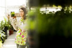 Young woman in flower garden Royalty Free Stock Photo