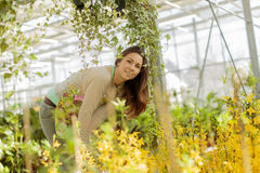 Young woman in flower garden Royalty Free Stock Photography