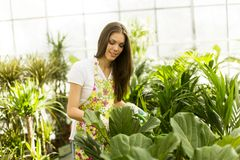 Young woman in flower garden Royalty Free Stock Photos