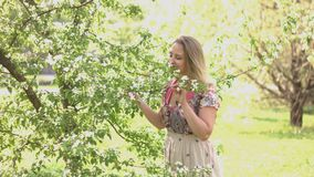 Walk in the spring park. A young woman in a folk dress stands near a flowering tree and inhales its aroma stock footage