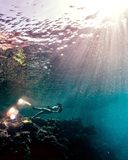 Young woman freediving near school of fish. Young woman freediving in a sea over vivid coral reef stock photography
