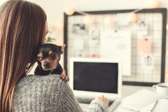 Young woman freelancer indoors home office concept winter atmosphere hugging puppy. Young female freelancer at home office winter sitting hugging toy terrier dog Stock Image