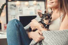 Young woman freelancer indoors home office concept winter atmosphere with puppy close-up. Young female freelancer at home office winter sitting hugging toy Royalty Free Stock Image