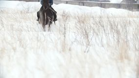 Young woman galloping on big red horse in snow field - slow-motion. Shot stock video