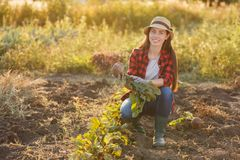 Woman gardener with beet Stock Images