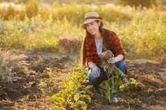 Woman gardener with beet Stock Photo