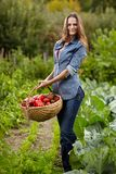 Young woman gardener holding a basket full of red paprika Stock Images
