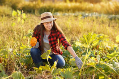 Woman gardener with squash Stock Images