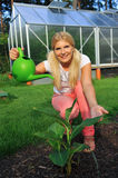 Young woman gardener watering plant. Young woman gardener watering green plant. outdoor Stock Photography