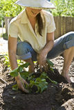 Young woman gardening. Stock Photography