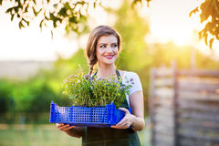 Young woman gardening Stock Image