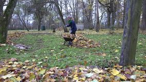 Woman gather leaves into barrow. Seasonal work in garden. 4K. Young woman gather dry maple leaves into barrow. Seasonal work in garden. Zoom out. 4K stock video