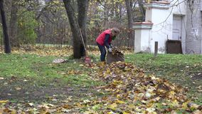 Woman gather dry maple leaves in fabric bag autumn. Zoom out. 4K. Young woman gather dry maple leaves in fabric bag in autumn time. Zoom out. 4K stock video footage