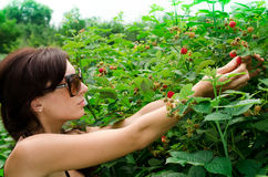 Young woman gathers a berries Royalty Free Stock Images