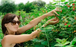 Young woman gathers a berries Stock Photo