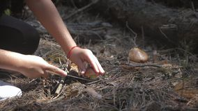 Young woman gathers mushrooms in the forest. A girl cuts a edible mushroom in a forest with a knife. Mushroom picker stock video