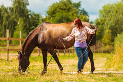 Young woman girl taking care of horse. Stock Images
