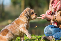 Young Woman Gives Her Dog A Treat Royalty Free Stock Photography