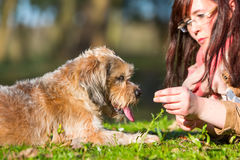 Young Woman Gives Her Dog A Treat Stock Photography