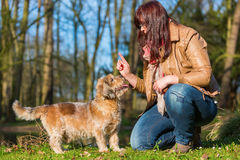 Young Woman Gives Her Dog A Treat Stock Photos