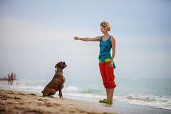 Young woman giving commands to boxer dog while walking Stock Photo