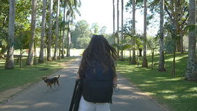 Young woman going along exotic parkland lane and viewing at palm tree. Summer vacation trip concept. Rear back view stock video footage