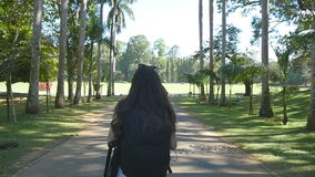 Young woman going along exotic parkland lane and viewing at palm tree. Summer vacation trip concept. Rear back view. Slow motion stock video footage