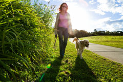 Young woman and golden retriever walking Stock Photos