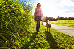 Young woman and golden retriever walking in the grass Royalty Free Stock Photo