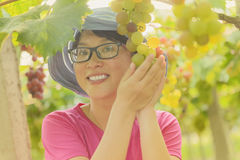 Young woman in grape plantation Stock Image