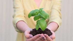 Young Woman with Green Young Plant In Hands stock video footage