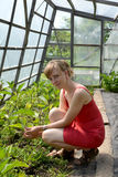 The young woman in the greenhouse with eggplants Royalty Free Stock Image