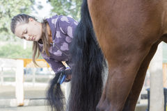Young woman grooming a horse Stock Photography
