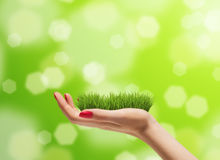Young woman hand with fresh green grass on it. Bright bokeh background. Concern for the environment concept Royalty Free Stock Photography