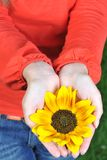 Young woman hands with flowers outdoor Stock Photos