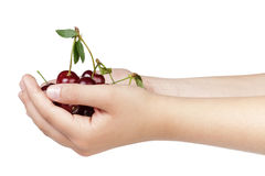 Young woman hands full of cherry berries Royalty Free Stock Photos