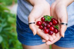 Young woman hands holding berries. Healthy food concept stock image
